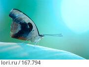 Купить «Бабочка на зеленовато-голубом фоне», фото № 167794, снято 3 января 2008 г. (c) Александр Чураков / Фотобанк Лори
