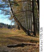 Купить «Лес и велосипедисты», фото № 170126, снято 13 октября 2007 г. (c) Igor Pavlenko / Фотобанк Лори