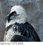 Купить «Голова орла (предположительно гриф)», фото № 171610, снято 1 января 2008 г. (c) Александр Чураков / Фотобанк Лори