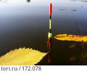 Купить «Поплавок», фото № 172078, снято 5 сентября 2006 г. (c) Кондратьев Игорь Витальевич / Фотобанк Лори