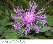 Купить «Осенний цветок. Макро.», фото № 174106, снято 3 октября 2007 г. (c) Илья Клыков / Фотобанк Лори