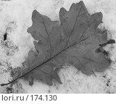 Купить «Лист на снегу», фото № 174130, снято 21 мая 2018 г. (c) Елена Каминер / Фотобанк Лори