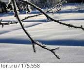 Купить «Зима», фото № 175558, снято 5 января 2006 г. (c) Тихомирова Ольга / Фотобанк Лори