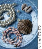 Купить «Морская тема», фото № 175570, снято 8 июля 2007 г. (c) Павлова Татьяна / Фотобанк Лори