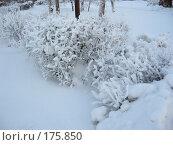 Зимние зарисовки. Стоковое фото, фотограф Cавельева Елена / Фотобанк Лори