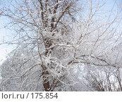 Мороз. Стоковое фото, фотограф Cавельева Елена / Фотобанк Лори