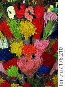 Купить «Радуга свежих цветов», фото № 176210, снято 15 апреля 2006 г. (c) Марина Мокеева / Фотобанк Лори