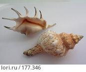 Купить «Морские раковины», фото № 177346, снято 27 августа 2006 г. (c) Галина  Горбунова / Фотобанк Лори