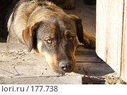 Купить «Сторожевой пес у порога», фото № 177738, снято 23 сентября 2018 г. (c) Антон Тарасов / Фотобанк Лори