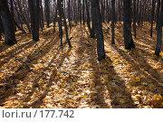 Купить «Осенний лес», фото № 177742, снято 28 мая 2018 г. (c) Антон Тарасов / Фотобанк Лори