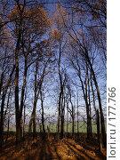 Купить «Осенний лес», фото № 177766, снято 23 сентября 2018 г. (c) Антон Тарасов / Фотобанк Лори