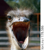 Купить «Страус Эму», фото № 178586, снято 25 августа 2007 г. (c) Дмитрий Алимпиев / Фотобанк Лори