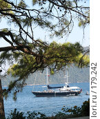 Купить «Вид яхты сквозь сосновые ветви», фото № 179242, снято 3 августа 2006 г. (c) Ирина Андреева / Фотобанк Лори