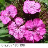 Купить «Цветы», фото № 180198, снято 12 июня 2007 г. (c) Александр Бербасов / Фотобанк Лори