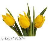 Купить «Желтые тюльпаны на белом фоне», фото № 180574, снято 19 января 2008 г. (c) Владимир Власов / Фотобанк Лори