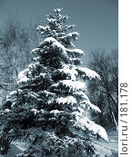 Купить «Ель в снегу. Тонирование», фото № 181178, снято 15 декабря 2007 г. (c) Петрова Ольга / Фотобанк Лори