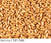 Купить «Зерна пшеницы, макро», фото № 181546, снято 18 октября 2006 г. (c) Коваль Василий / Фотобанк Лори