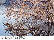 Купить «Морозное солнечное утро», фото № 182902, снято 16 января 2008 г. (c) Наталья Герасимова / Фотобанк Лори