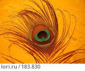 Купить «Перо павлина на желтом фоне», эксклюзивное фото № 183830, снято 29 ноября 2007 г. (c) Алёшина Оксана / Фотобанк Лори