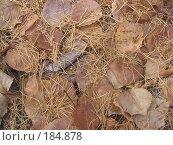 Фон из опавших осенних листьев в тайге на Байкале. Стоковое фото, фотограф Пыткина Альбина / Фотобанк Лори