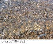 Кристально чистая питьевая вода озера Байкал. Стоковое фото, фотограф Пыткина Альбина / Фотобанк Лори