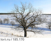 Купить «Дерево зимой», фото № 185170, снято 23 декабря 2007 г. (c) Максим Рыжов / Фотобанк Лори