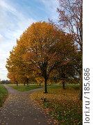 """Купить «""""Регент"""" парк», фото № 185686, снято 3 ноября 2007 г. (c) Юлия Севастьянова / Фотобанк Лори"""