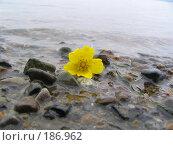Купить «Цветок унесло приливом», фото № 186962, снято 13 июня 2005 г. (c) Елизавета Калбасова / Фотобанк Лори