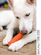 Купить «Зайчик», фото № 188030, снято 26 января 2008 г. (c) Игорь Соколов / Фотобанк Лори