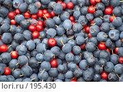 Купить «Ягода черника, брусника», фото № 195430, снято 21 августа 2006 г. (c) Григорий Сухарев / Фотобанк Лори