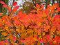Яркие осенние листья, фото № 195834, снято 13 ноября 2004 г. (c) Иван Сазыкин / Фотобанк Лори
