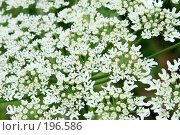 Цветы. Стоковое фото, фотограф Светлана Архи / Фотобанк Лори