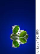 Купить «Замороженные листочки мяты 01», фото № 196806, снято 17 ноября 2018 г. (c) Григорий Сухарев / Фотобанк Лори
