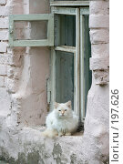 Купить «Провинциальная красавица», фото № 197626, снято 26 августа 2007 г. (c) Юрий Синицын / Фотобанк Лори