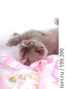 Купить «Серый котенок британской породы», фото № 199390, снято 29 мая 2007 г. (c) Ольга С. / Фотобанк Лори