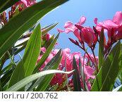 Цветы. Стоковое фото, фотограф Олег Чумак / Фотобанк Лори