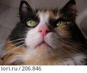 Купить «Кошка важная», эксклюзивное фото № 206846, снято 3 декабря 2007 г. (c) lana1501 / Фотобанк Лори