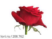 Купить «Одна красная роза на белом фоне», фото № 208762, снято 15 января 2008 г. (c) Останина Екатерина / Фотобанк Лори
