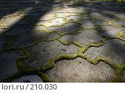 Купить «Камень поросший мхом», фото № 210030, снято 10 октября 2004 г. (c) Данилин Василий Сергеевич / Фотобанк Лори