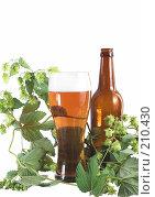 Купить «Бокал пива с хмелем и бутылкой», фото № 210430, снято 1 сентября 2007 г. (c) Михаил Котов / Фотобанк Лори