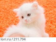 Купить «Котенок на оранжевом ковре», фото № 211794, снято 25 февраля 2008 г. (c) Андрей Щекалев (AndreyPS) / Фотобанк Лори