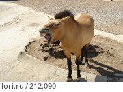 Купить «Лошадь», фото № 212090, снято 3 июня 2007 г. (c) rommor / Фотобанк Лори