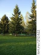Купить «Высокие ели в парке», фото № 212622, снято 20 мая 2007 г. (c) Валерия Потапова / Фотобанк Лори