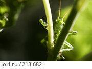 Кузя. Стоковое фото, фотограф Андрей Явнашан / Фотобанк Лори