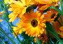 Яркие цветы, фото № 214818, снято 21 июля 2017 г. (c) ElenArt / Фотобанк Лори