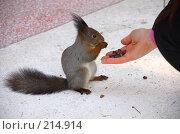 Купить «Белка кушает с руки», фото № 214914, снято 13 января 2008 г. (c) Golden_Tulip / Фотобанк Лори