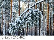 Снежная сказка. Стоковое фото, фотограф Михаил Марков / Фотобанк Лори