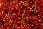 Красная смородина крупным планом, фото № 216622, снято 14 июля 2007 г. (c) Лидия Рыженко / Фотобанк Лори