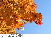 Купить «Золотая осень», фото № 216694, снято 19 сентября 2018 г. (c) ElenArt / Фотобанк Лори