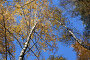 Золотая осень, фото № 216706, снято 22 февраля 2017 г. (c) ElenArt / Фотобанк Лори